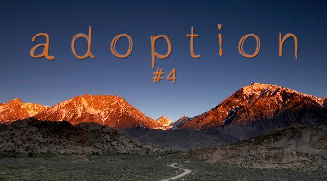 21-0711 Adopsi #4